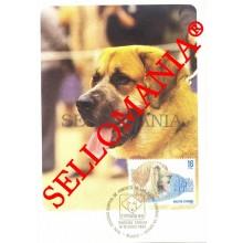 1983 TARJETA MAXIMA CARD PERROS RAZA MASTIN ESPAÑOL PUREBRED DOGS 2712 TC22727