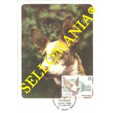 1983 TARJETA MAXIMA CARD PERROS RAZA PODENCO IBICENCO PUREBRED DOGS 2713 TC22728
