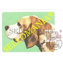 1983 TARJETA MAXIMA CARD PERROS RAZA PACHON NAVARRO PUREBRED DOGS 2714 TC22729