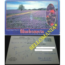 POSTCARD BLUEBONNETS TEXAS STATE FLOWERS INDIAN PAINTBRUSH FLOWER ESTADOS UNIDOS POSTAL  CC04651 USA