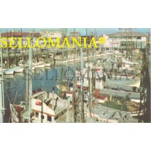 POSTCARD FISHING FLEET  SAN FRANCISCO CALIFORNIA CC05016 USA